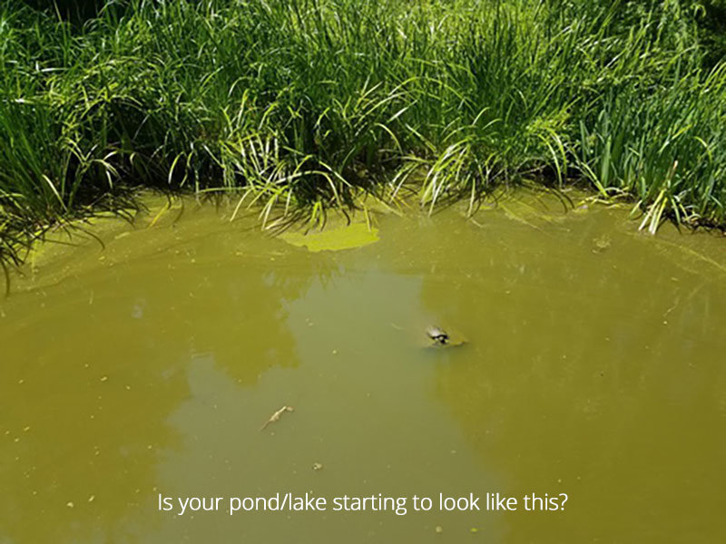 murky_pond2